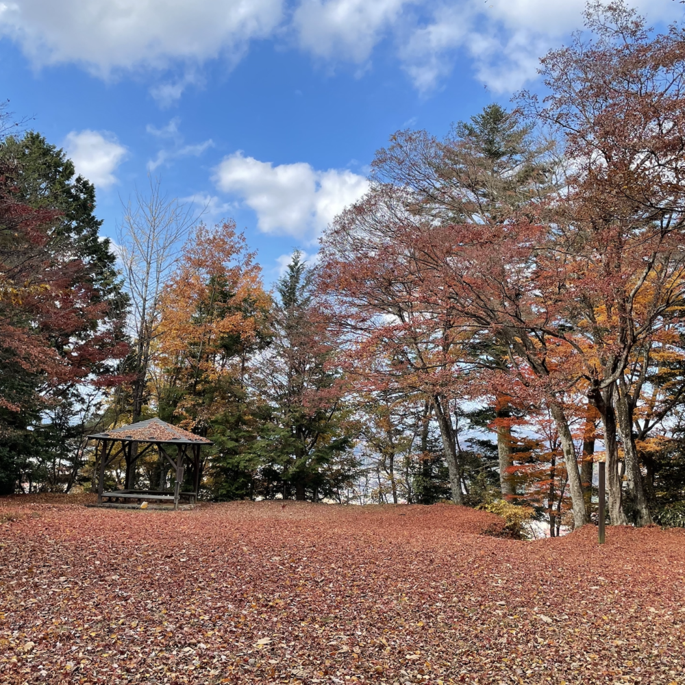 Beautiful Autumn in Japan! and the COVID-19 situation update